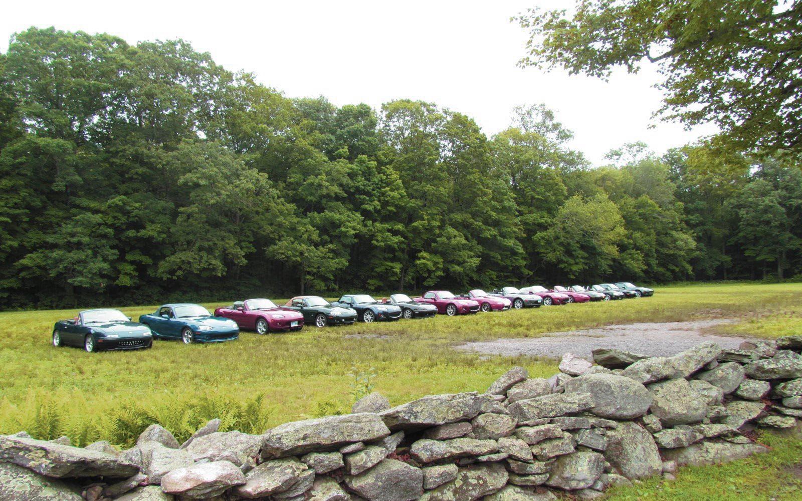 cars-field